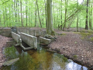 waterloopbos (3)