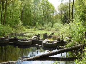 waterloopbos (7)